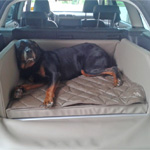 Hundetransport Skoda