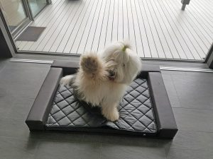 Hundebett Leder Sofa
