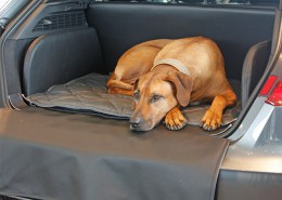 Hundetransport Kofferraum Hund Audi A3