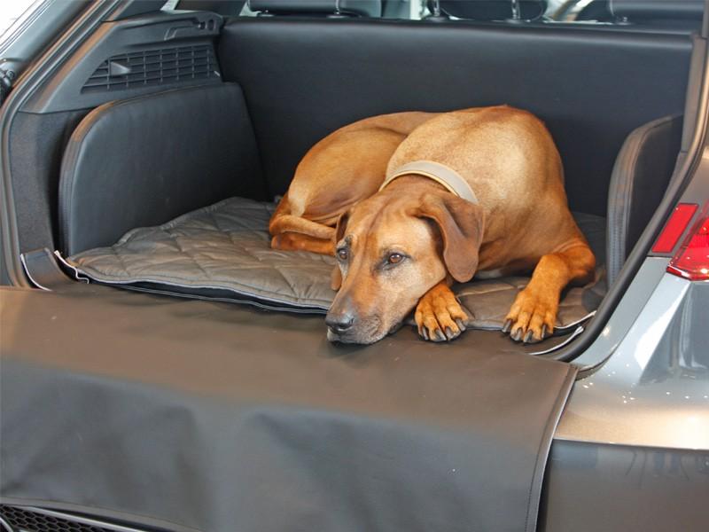 Hundetransport Kofferraum Hund Audi A3