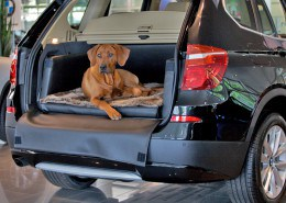 Hundetransport Kofferraum Hund BMW X3