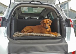 Hundetransport Kofferraum Hund Ford Kuga