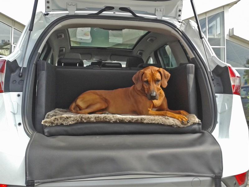 Hundetransport Kofferraum Hund Ford Kuga