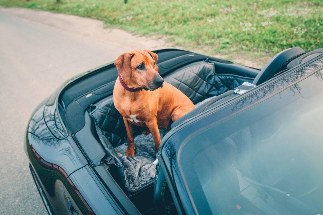 Porsche Macan Kofferraum Hund >> Porsche und Hund -Transportlösung für Rückbank und Kofferraum