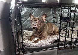 Hundetransport Decke Hund Rückbank Auto passend