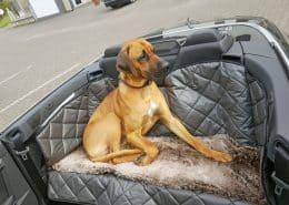Hundetransport Rückbank Rücksitz Hund Mercedes Benz E 300 Cabrio