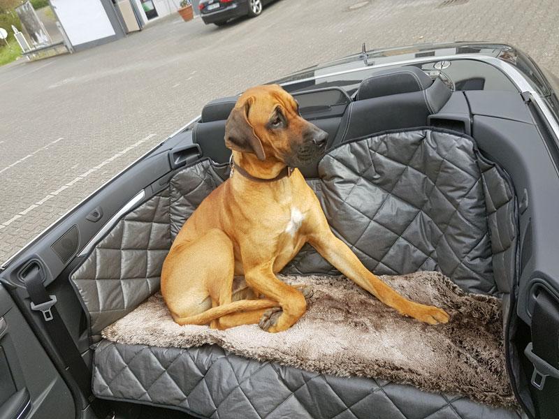 Hund Im Cabrio