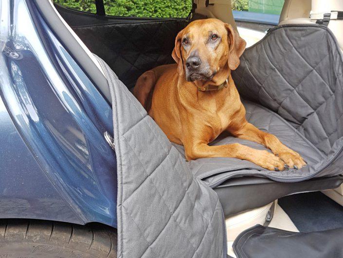 Rückbank Rücksitz Hund Porsche Panamera