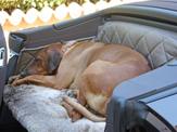 Rückbank Porsche 911 Hund