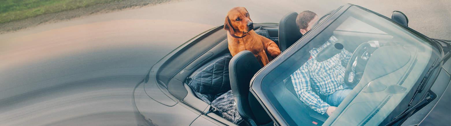 Porsche Hund Rückbank