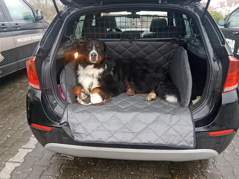 Hundetransport Kofferraum Schondecke BMW X1 Hund