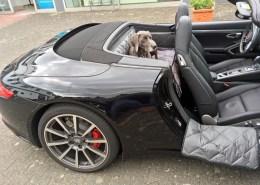 Hundetransport Rückbank Rücksitz Notsitz Hund Porsche 911 991 Cabrio