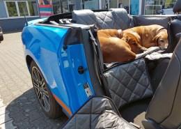 Hundetransport Rückbank Schondecke Ford Mustang Cabrio Hund